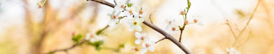 Célébrons le printemps - Sapone & Sens